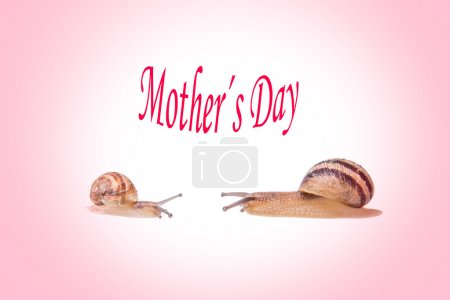 Snails mothers day concept