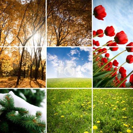 Photo pour Concept nature réalisé à partir de mes images photo tonique spéciale fx - image libre de droit