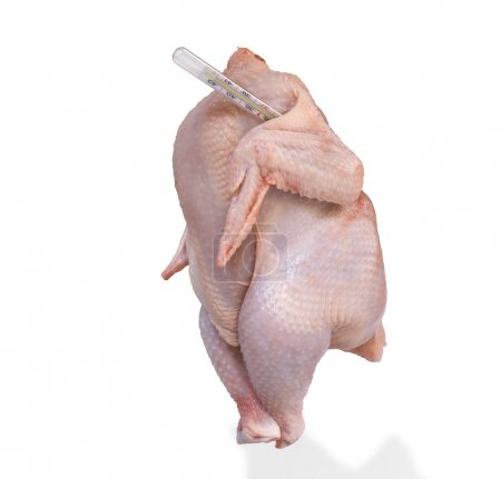 chicken with thermometer