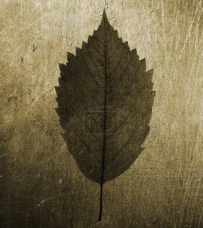 Photo pour Ancienne texture lumière spéciale et sépia photo fx, point de mise au point sur le centre de la photo - image libre de droit