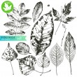Highly detailed hand drawn leaves isolated on whit...