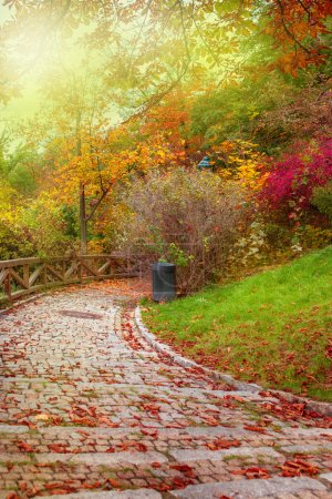 Autumnal stone path