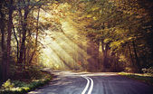 Great shoot of sunbeams above the road