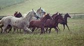 photo de chevaux sauvages essaim sur le pré