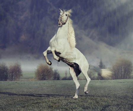 Majestic horse jumping on the green meadow