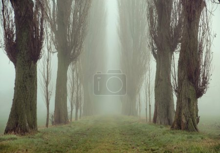 Photo for Amazing picture of old trees - Royalty Free Image