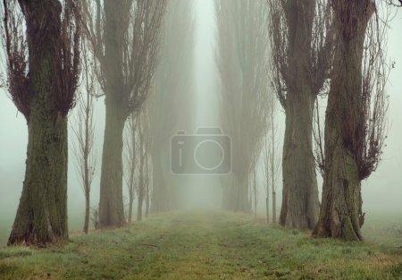 Photo pour Image étonnante de vieux arbres - image libre de droit
