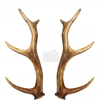 Two deer horns