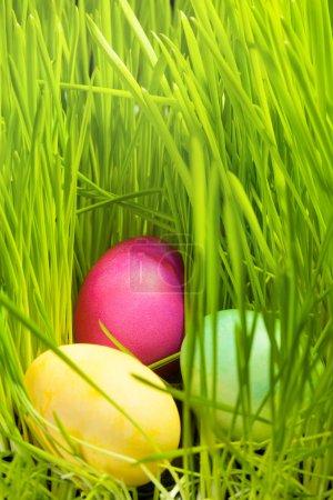 Photo pour Trois beaux oeufs de Pâques de couleur dans l'herbe verte de printemps - image libre de droit