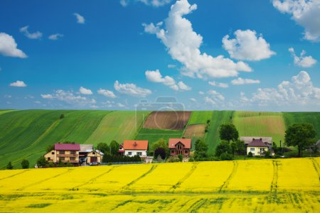 Rapeseed field and houses