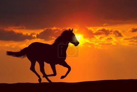 Photo pour Course de chevaux sous le coucher du soleil - image libre de droit