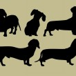 Silhouette of the dogs...