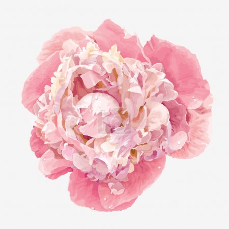 Illustration for Luxurious pink peony flower painted in pastel colors - Royalty Free Image