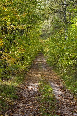 automne route