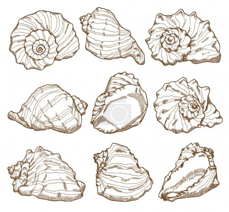 Hand drawing seashell set
