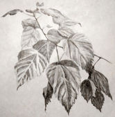 Illustration of leaves branch