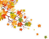 Autumn maple leaves background Vector illustration