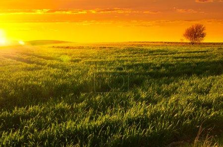 Sunset Barossa Valley
