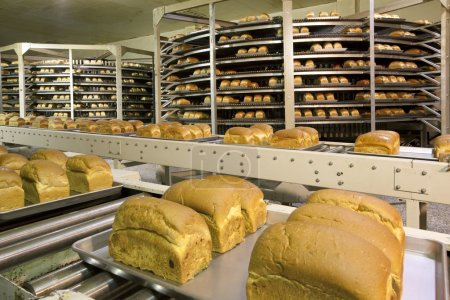 Bread production plant