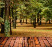 Autumn forest with and wood planks floor
