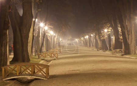 Misty night in the park
