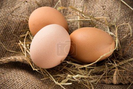Photo pour Gros plan sur les œufs - image libre de droit