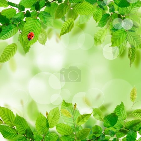 Photo for Fresh green leaves background texture - Royalty Free Image