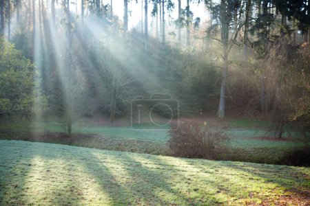 Photo for Beautiful morning scene in the forest with sun rays and long shadows - Royalty Free Image