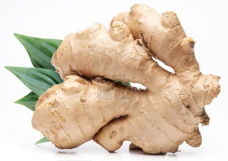 Photo for Ginger with leaves isolated on white background. - Royalty Free Image
