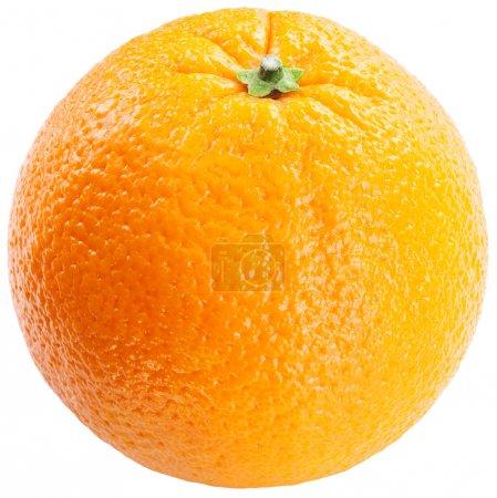 Photo pour Orange sur fond blanc. - image libre de droit