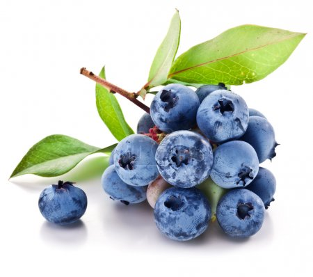 Blueberries with leaves on a white background.
