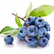 Blueberries with leaves on a white background. Stu...