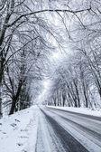 Země sněhu road