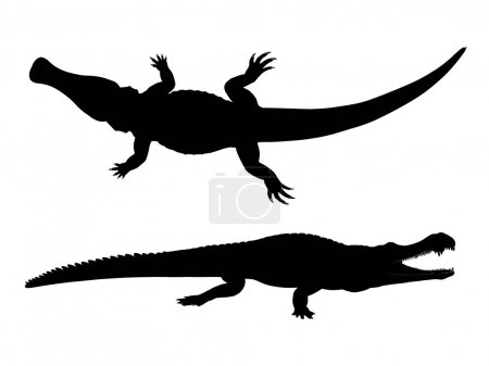Silhouette eines Krokodils