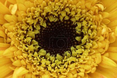 Photo pour Macro fleur jaune - image libre de droit