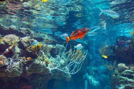 Underwater panorama in a shallow coral reef with colorful tropical fish and water surface in background