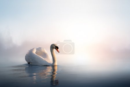 Photo for Swan floating on the water at sunrise of the day - Royalty Free Image