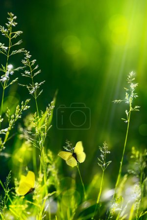 Abstract summer floral green nature background