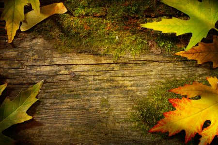 Photo for Art autumn fall leaf on wood background - Royalty Free Image