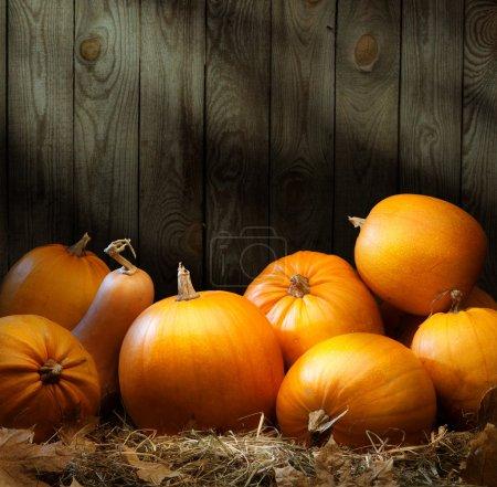Photo pour Art automne citrouille thanksgiving fond - image libre de droit