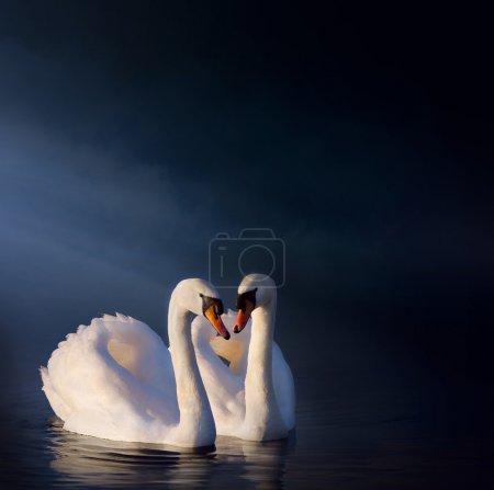 Photo pour Art amour couple de cygnes - image libre de droit