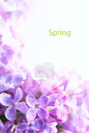 Photo pour Printemps art belles fleurs lilas à fond la frontière - image libre de droit