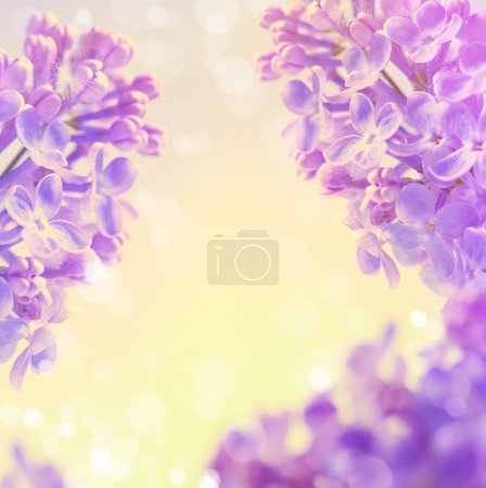 Abstract floral  spring background,  Blooming flowers lilac