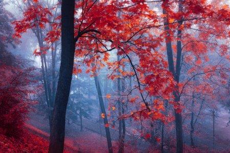 Photo pour Arbres aux feuilles rouges dans la brume bleue au parc automne - image libre de droit