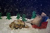 želva nese dárky
