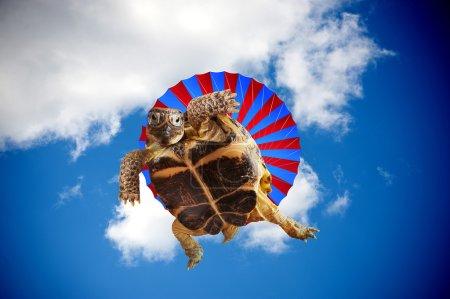 Photo pour Tortue sauter avec un parachute - image libre de droit