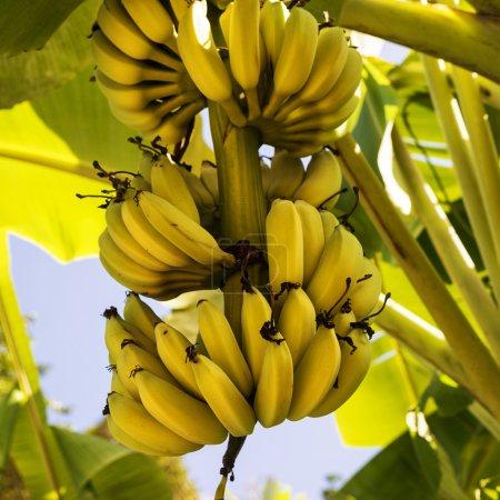 Foto de Kakao çekirdekleri üzerine beyaz izole yaprak ile. - Imagen libre de derechos