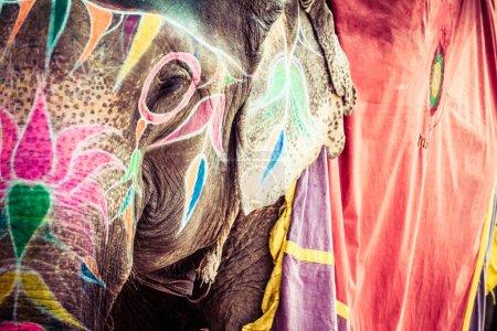 Photo for Elephant. India, Jaipur, state of Rajasthan. - Royalty Free Image