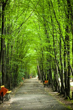 Foto de Tunel de árboles de bosque verde en el parque - Imagen libre de derechos
