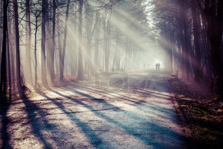 Photo for Road and sunbeams in strong fog in the forest, Poland. - Royalty Free Image